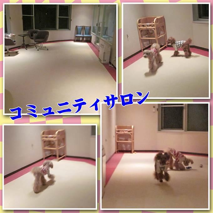 46_20121220211912.jpg