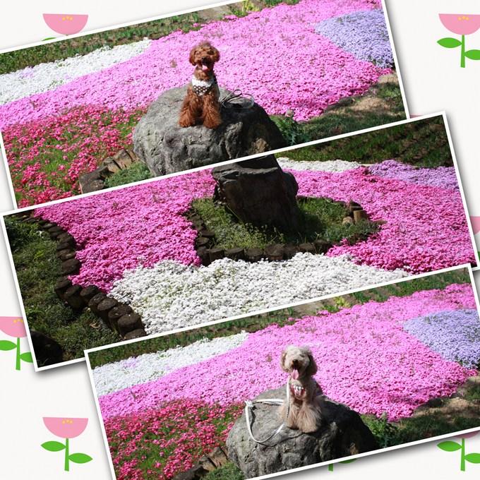 5_20120504200641.jpg