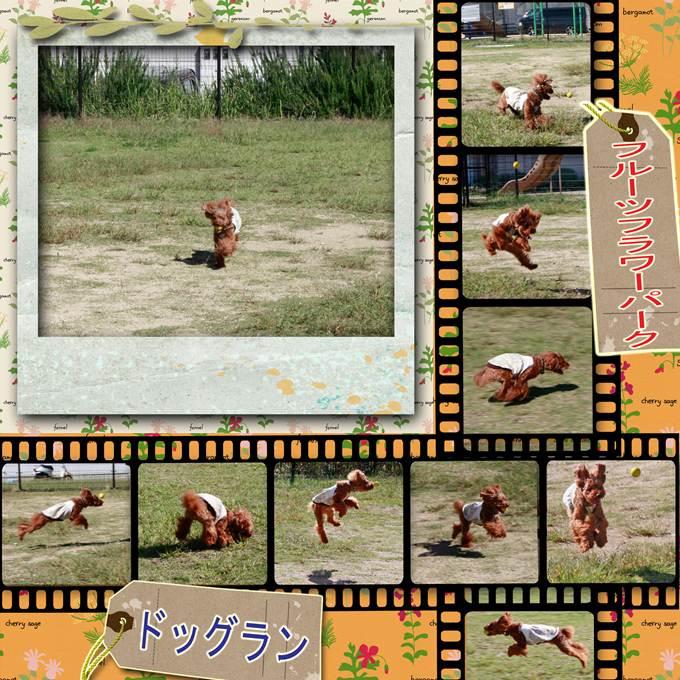 5_20121013075947.jpg