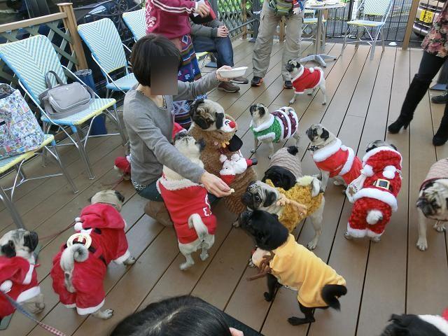 2012.12.09パグクリスマスオフ会 (216)