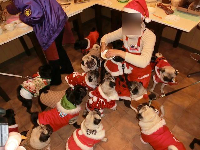 2012.12.09パグクリスマスオフ会 (269)