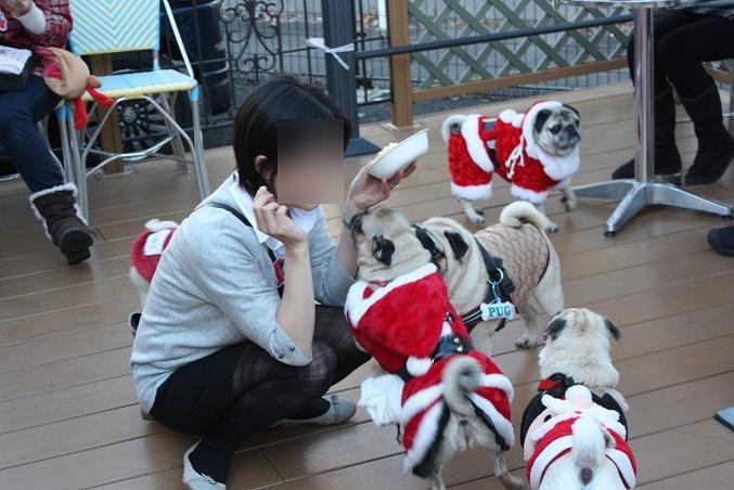2012.12.09パグクリスマスオフ会 (174)
