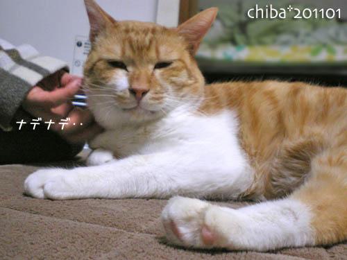 chiba11-1-104.jpg