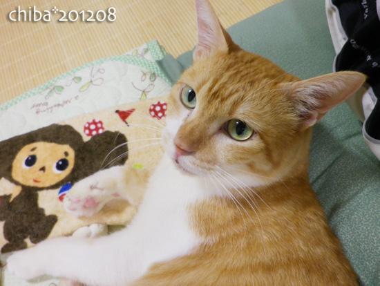 chiba12-08-29.jpg