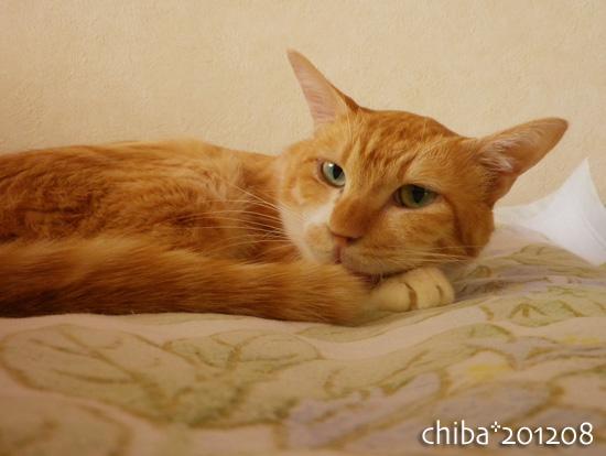 chiba12-08-45.jpg