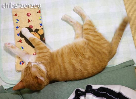 chiba12-09-10.jpg