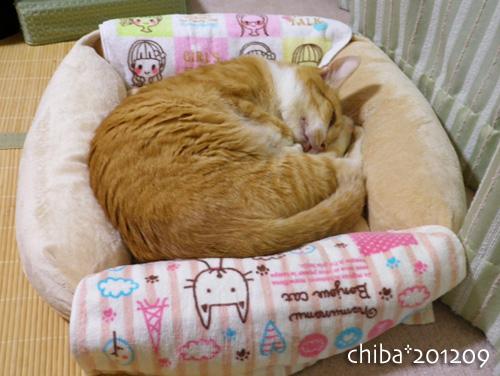 chiba12-09-14.jpg