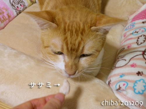chiba12-09-15.jpg