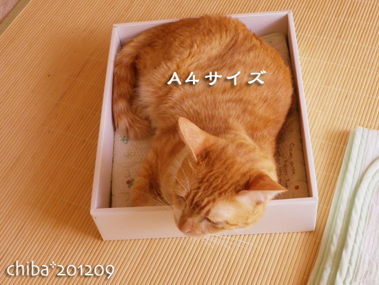 chiba12-09-20.jpg