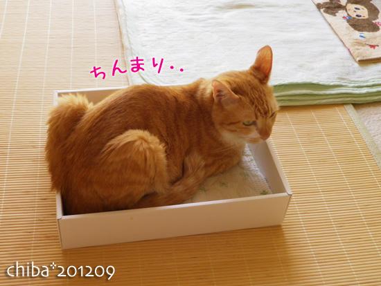 chiba12-09-22.jpg
