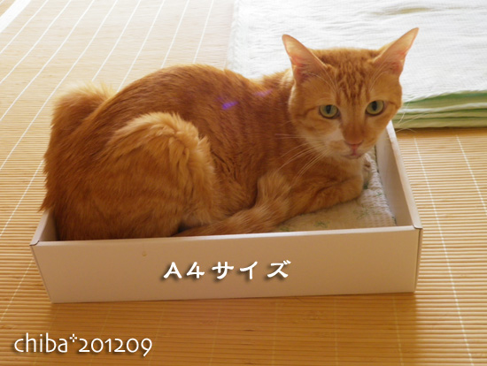 chiba12-09-23.jpg