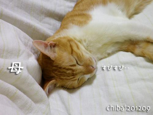 chiba12-09-31.jpg