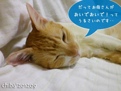 chiba12-09-32.jpg