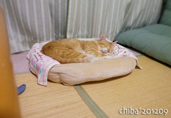 chiba12-09-36.jpg