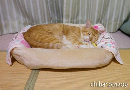 chiba12-09-37.jpg