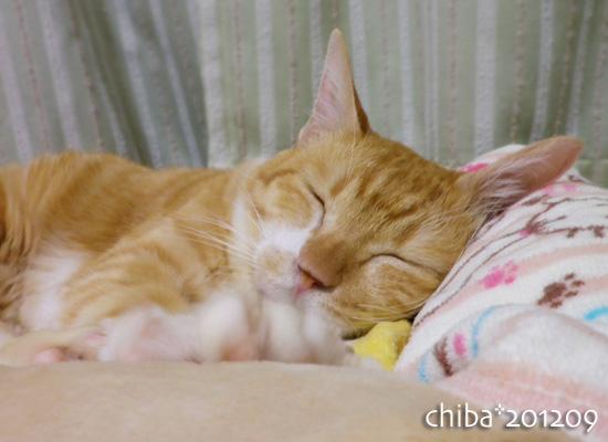 chiba12-09-39.jpg