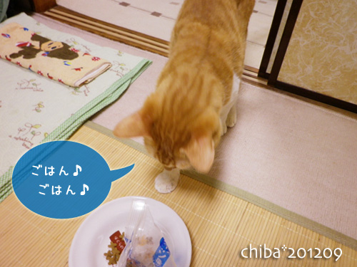 chiba12-09-49.jpg
