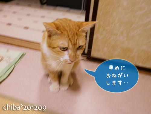 chiba12-09-50.jpg