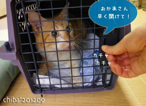 chiba12-09-65.jpg