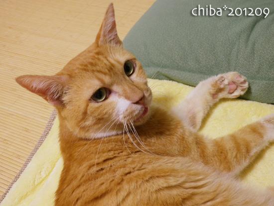 chiba12-09-73.jpg