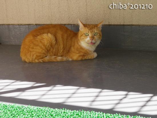 chiba12-10-01.jpg