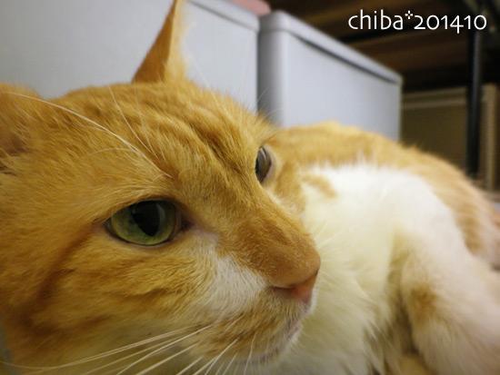 chiba14-10-125x.jpg