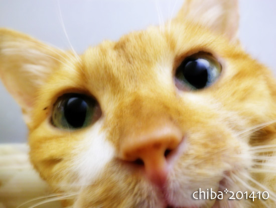 chiba14-10-128x.jpg