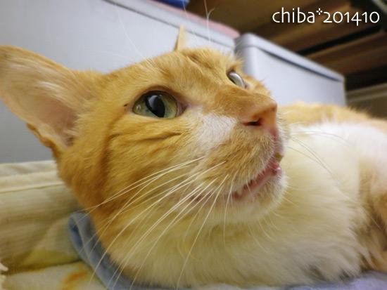 chiba14-10-131.jpg