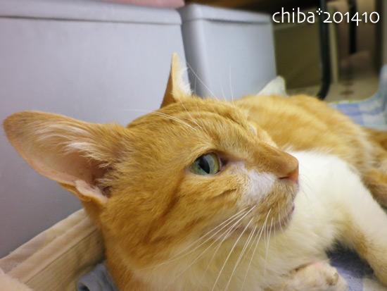 chiba14-10-132.jpg