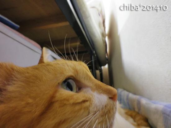 chiba14-10-133.jpg