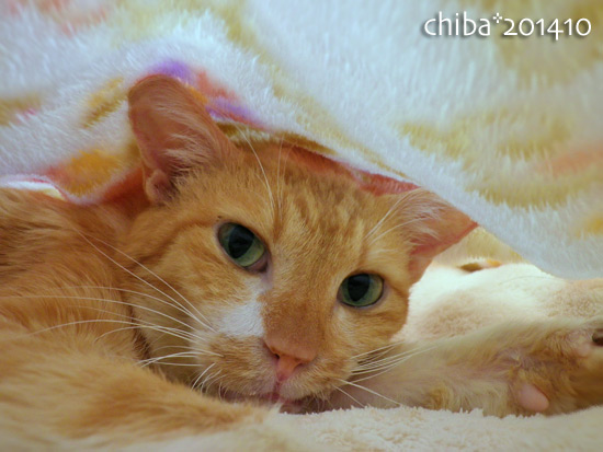 chiba14-10-136.jpg