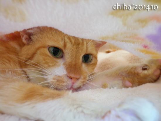 chiba14-10-141.jpg