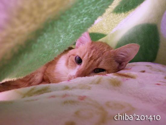 chiba14-10-164.jpg
