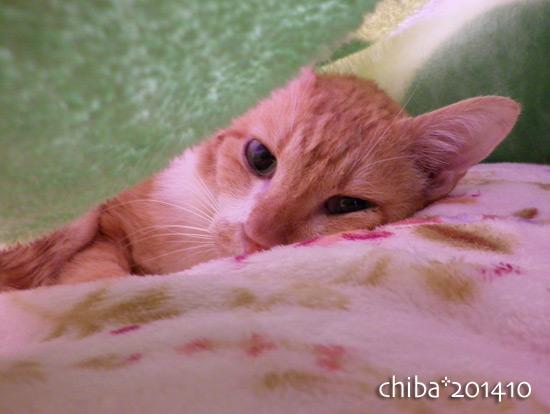 chiba14-10-165.jpg