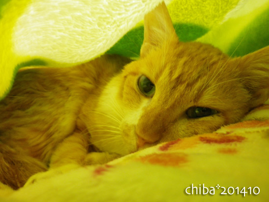 chiba14-10-167.jpg