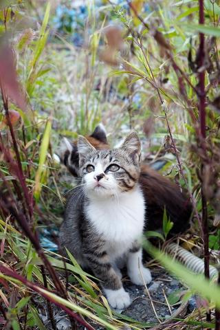 見上げる仔猫