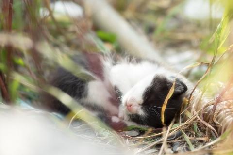 仔猫の寝顔