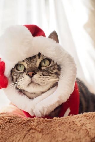 サンタのすずのすけ