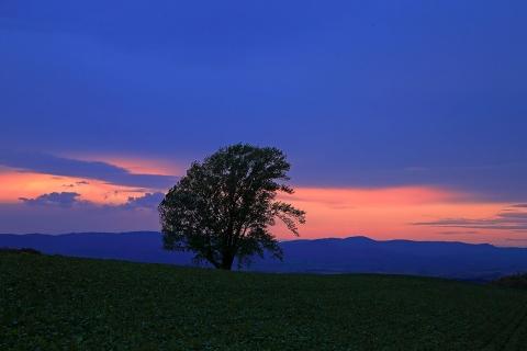 哲学の木の夕焼け