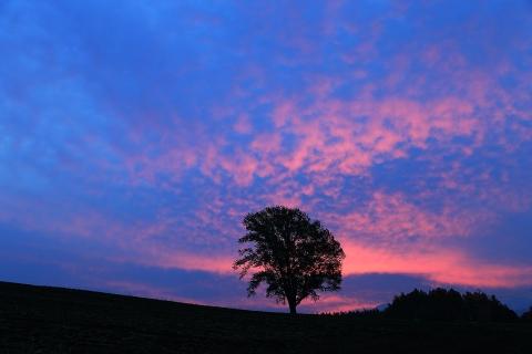 哲学の木の朝焼け