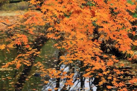 鳥沼公園の紅葉