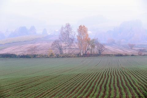 朝霧の丘の紅葉