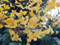 20130107紅葉の公園1