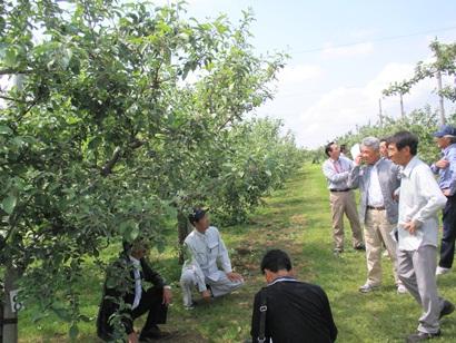 りんご園地視察