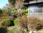 縁側の外の植木