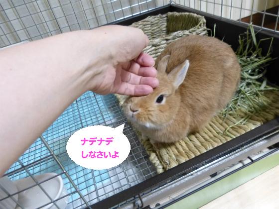 ぴょん子141020_02