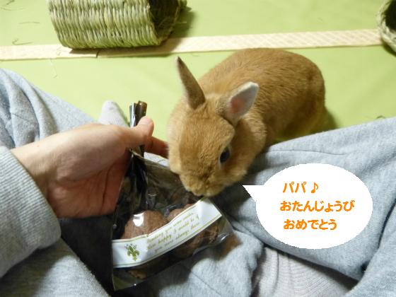 ぴょん子141112_01