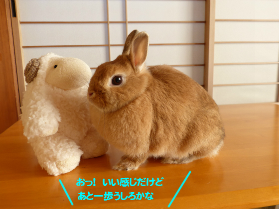 ぴょん子141208_08