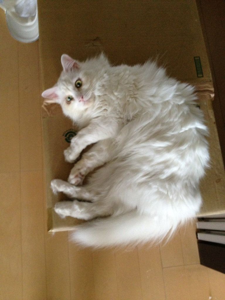 securedownload-1.jpeg