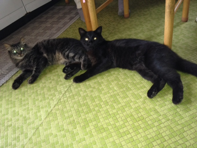 securedownload_20120816081229.jpeg